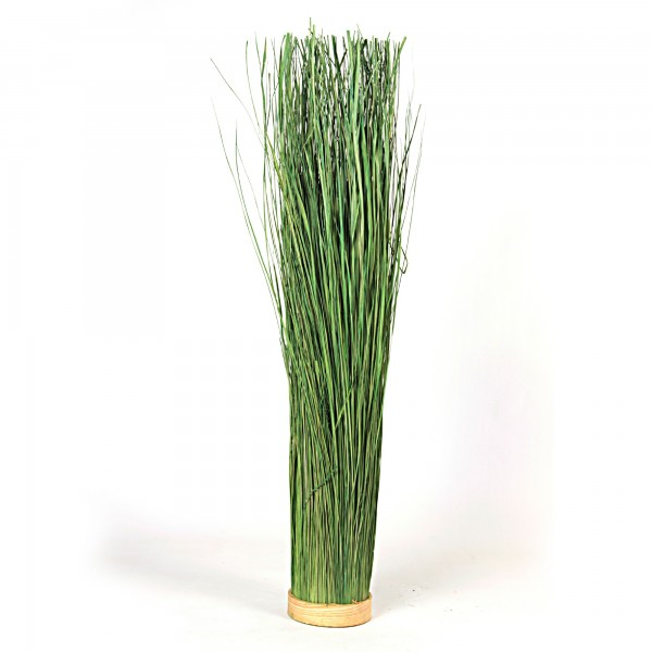 Elymus Repens, Ø 16 cm, H 110 cm, grün