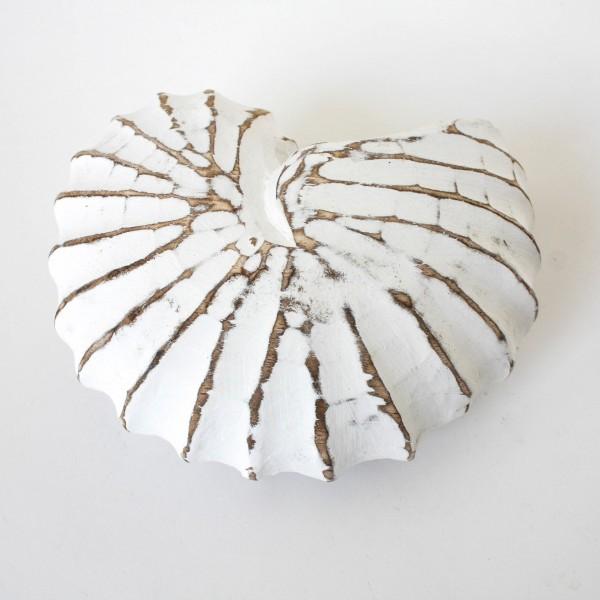 Dekorative Holzmuschel, weiß, H 6,5 cm, Ø 12 cm