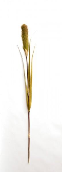 Schilfgras, grün, H 120 cm