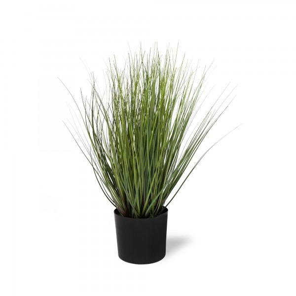 Zwiebelgras, grün, Ø 10 cm, H 35 cm