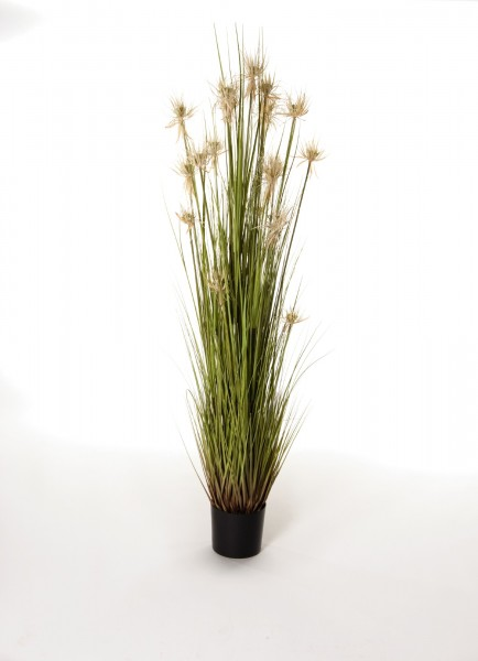 """Kunstpflanze """"Papyrusgras"""", weiß, H 110 cm"""