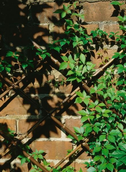 Bambusrankgitter mittel, auseinanderziehbar bis 205 cm x 67 cm