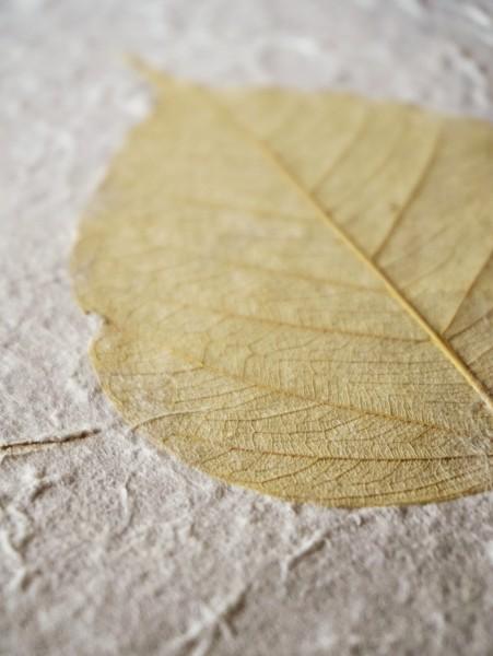 Geschenkpapier Trockenblume Bodhi, weiß, braungelb, T 79 cm, B 53 cm