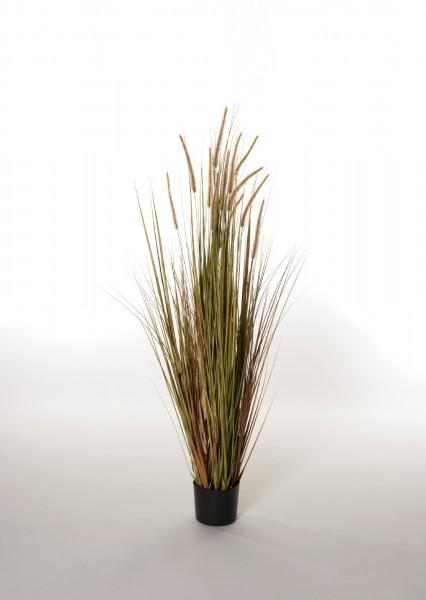 Japangras, braun, H ca. 150 cm