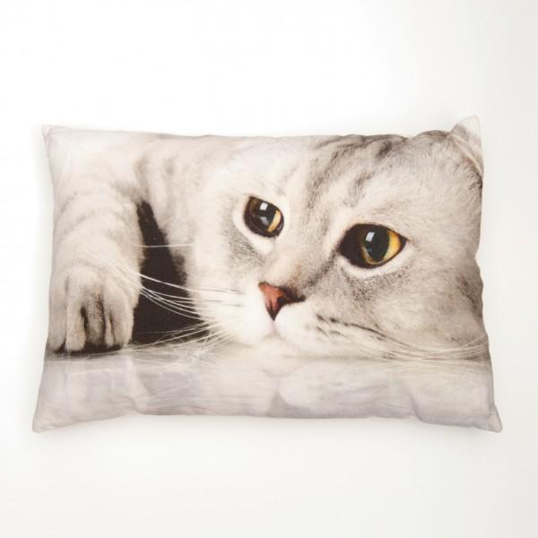 """Fotodruck-Kissen """"Katze Dream"""", inklusive Füllung, L 40 cm, B 60 cm"""
