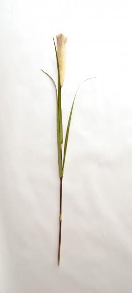 Schilfgras mit Blüte, weiß, H 120 cm