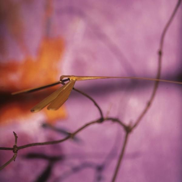 Bambuslibelle S, natur