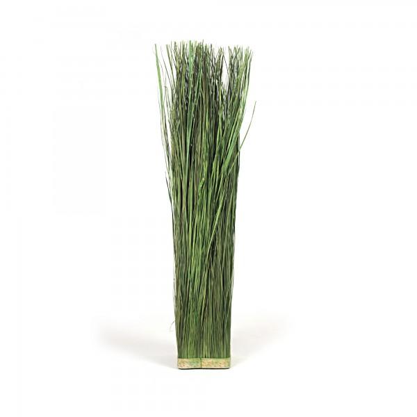 Elymus Repens, L 17 cm, B 17 cm, H 100 cm, grün