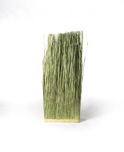 Gras Elymus Repens, grün, T 10 cm, B 40 cm, H 100 cm