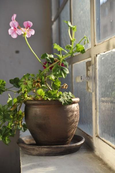 Pflanztopf 'PT', natur, T 50 cm, B 50 cm, H 40