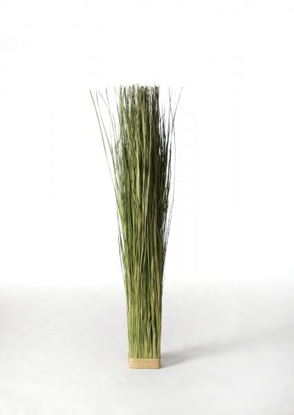 Gras Elymus Repens, grün, T 12 cm, B 12 cm, H 100 cm